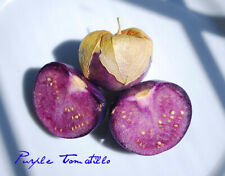 20 Seeds Purple Tomatillo, Organic, Husk Tomato, Miltomate, Physalis