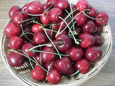 30 Sweet Cherry Seeds