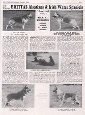 GERMAN SHEPHERD OUR DOG 1949 DOG BREED KENNEL ADVERT PRINT PAGE BRITTAS KENNEL