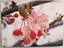 "CHERRY BLOSSOMS WALL ART CANVAS STRETCHED ON FRAME PHOTO WALL ART 9.5"" X 7"""