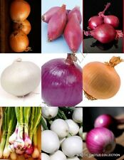 Onion Mix vegetable mixed rare herb plant heirloom Organic garden seed 150 Seeds