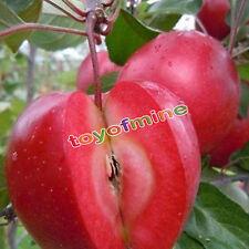 10pcs Rare Red Meat Bonsai Apple Tree Seeds Garden Yard Sweet Fruit Plant Seed