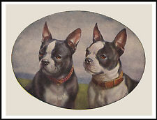 BOSTON TERRIER HEAD STUDY TWO DOGS LOVELY VINTAGE STYLE DOG ART PRINT POSTER