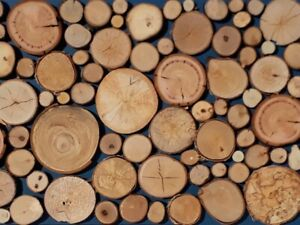 Wholesale 1-100pcs Wood Slices Rustic Wall Christmas Craft Decorative logs eco
