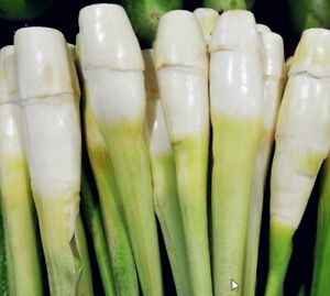 Zizania Latifolia water vegetables mix colors plants rare home garden 100 seeds