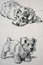 Cecil Aldin 1939 Adorable Sealyham Terrier Vintage Dog Art Print Matted