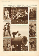 1915 WWI PRINT ~ USE OF MASCOTS IN THE SERVICES SOLDIERS LOVE OF PET ANIMALS
