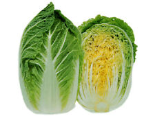 """Michihili Chinese Cabbage *Heirloom* (500 Seed's) """"FREE SHIPPING"""" <NON GMO>"""