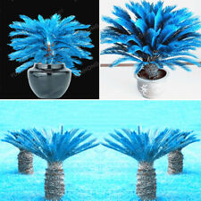 RARE!!! 100pcs Blue Sago palm tree Seeds Bonsai Plant in Pot for Home and Garden
