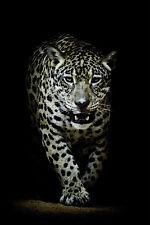Wallario Premium Glas//Acrylglas Leopard auf Baumstamm Raubkatze 125 x 50 cm