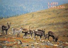 Finland Lappi Lapland, Poro Rangifer Tarandus