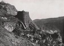 1928 Vintage FOREST LANDSCAPE Tree Forestry Germany Photo ALBERT RENGER-PATZSCH