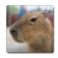 Capybara Animal Coaster cute gift idea rodent jungle kids party present