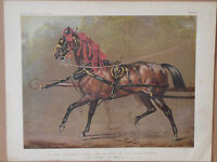 1876 Antique Victorian Chromo Print A STATE CARRIAGE HORSE HRH Prince of Wales