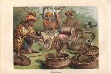 BRILLENSCHLANGE Naja Naja  Schlange  Südasiatische  Kobra Lithographie 1892