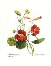 1991 Vintage REDOUTE BOUQUET #61 HUNDRED PETAL ROSE /& Color Art Print Lithograph
