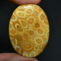 Cts. 41.80 Natural Oval Morocco Fossil Coral Cabochon Cab Loose Gemstone
