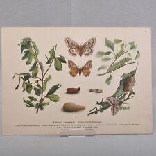 """Paul Ihle """"Biologien heimischer Schmetterlinge"""", 28 Farblithografien Jugendstil"""