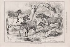 OLD ANTIQUE 1879 ENGRAVING PRINT PRIZE CATTLE AT THE DAIRY SHOW b118