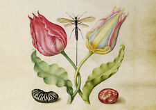 Circa 1592 Flemish Botanical Watercolor Flowers Provincial Fine Canvas Print