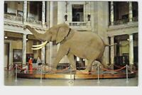 PPC POSTCARD WASHINGTON D.C. MUSEUM OF NATIONAL HISTORY SMITHSONIAN INSTITUTION
