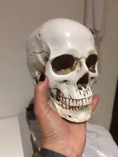 Lebensgröße 1:1 Menschlicher Schädel Replik Kunstharz Modell Medical