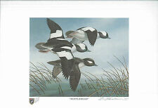 ILLINOIS #13 1987 STATE DUCK STAMP PRINT BUFFLEHEADS by Bartlett Kassabaum