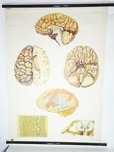 Rouleau Vintage Zentralnervensystem Cerveau Neurologie Lehrkarte Tableau (5