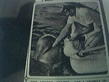 magazine picture 1954 usa bubbles the whale palos verdes california