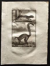1799 - Buffon - Le touan, le mococo - Gravure zoologie
