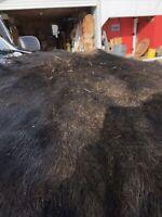 A Large Vintage Moose Taxidermy Moose Hide Rug