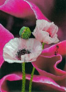 "ACEO Original ""Delicate Poppies"" Collage & Painting, Hélène Howse"