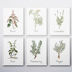 Kitchen Herbs Wall Art Botanical Basil Dill Thyme Mint Lavender Print Poster
