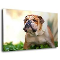 English British Bulldog Animal Dog Pet Animal Canvas Wall Art Picture Print