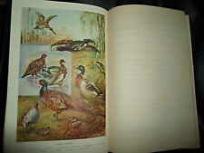 VOLUME 6 ~ The Standard Cyclopedia of Modern Agriculture Circa 1910 +Illustrated