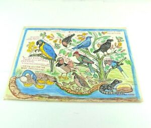 Eunice McAdams Hand Drawn Birds Picture Trees Leaves Different Types Parrot