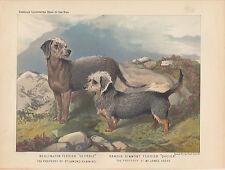 Dandie Dinmont Terrier Dog & Bedlington Terrier Dog Antique Lithograph 1881