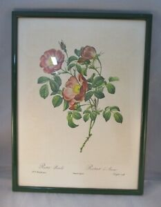Vintage Retro PJ Redoute French Botanical Rose Prints - Framed x 2