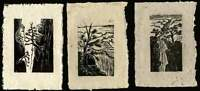 SET 3 Original Woodcut Prints Grand Canyon Hiker's Views Rim Trail
