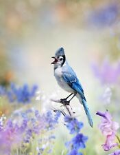 METAL REFRIGERATOR MAGNET Male Bluejay Bird Birds Flowers Blue Lavender