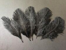 100 Pcs black ostrich feathers plume(15-20cm)
