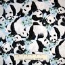 Animal Fabric - Panda Bears & Bamboo on Blue - Timeless Treasures YARD