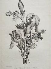 IRIS HYACINTHE MIRTHE Gravure JEAN LOUIS PREVOST Feuchot BOTANIQUE Basset 1805