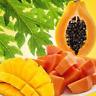 Mango Papaya Fragrance Oil Candle Making Supplies FREE SHIP