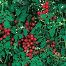 Tomato Seed, Sweetie Cherry Tomatoes, Non-Gmo Heirloom Tomatoes, Very Sweet 50ct