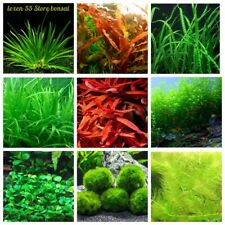 1000 Aquarium Grass Seeds Rare 9 Kinds Fish Shelter Ornamental Live Water Plants
