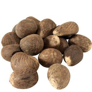 Whole Tagua Nuts from Ecuador Fair Trade - Pckg of 5