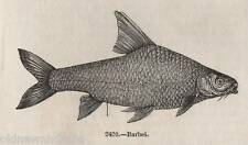ORIGINALE 1845 stampa Barbiglio Pesca a Mosca Pesca Sportiva Tackle Pesce Rod FIUME CESTO 2