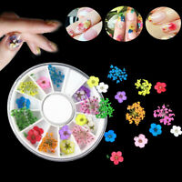 18pcs 3D Nail Art Tips Mixed Dried Flower Design Manicure DIY Wheel Decoration