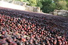 5# BRAZIL SUL DE MINAS RAW GREEN ARABICA COFFEE BEANS